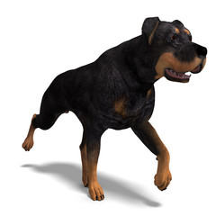 Rottweiler Dog. 3D rendering with clipping path and shadow over