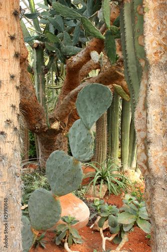 composition of cactus de tristanbm photo libre de droits. Black Bedroom Furniture Sets. Home Design Ideas