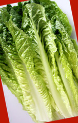 Fresh Romaine Lettuce On Creative Background