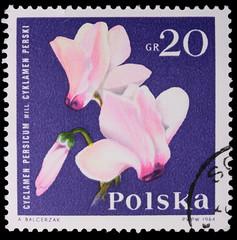 Poland - CIRCA 1964: A stamp - Cyclamen Persium