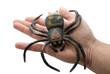 ragno in mano