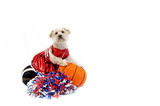 Cheerleading Canine Style poster
