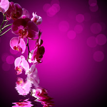 Orchidée rose, fond violet