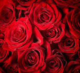 Fototapety Roses Background