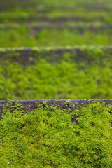 moss on stairs