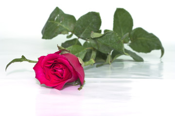 Red roses to those we love and we want them to love us too.