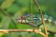 Fototapeten,close-up,details,kopf,grün