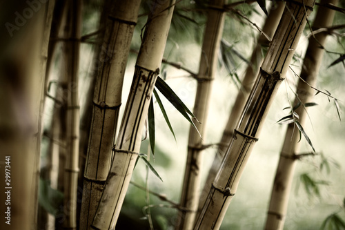 Bamboo forest background © logoboom