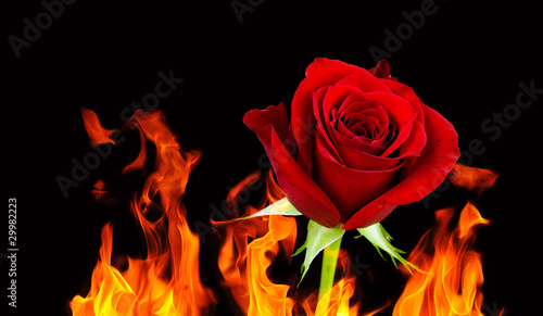 Rose and flames