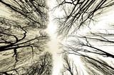 trees - 29988868