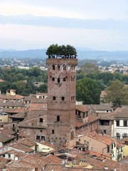 Aerial view of Guinigi Tower, Lucca city, Tuscany, Italy.