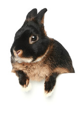 Baby bunny on a white background