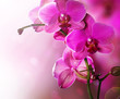 Fototapeten,orchid,blumenstrauss,landesgrenzen,entwerfen