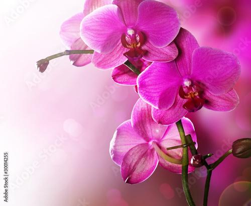 Fototapeten,orchidee,blumenstrauss,landesgericht,entwerfen