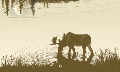 Elk in the drinking water.