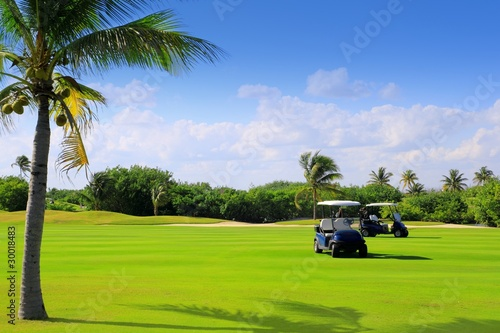 Fototapeta golf course tropical palm trees in Mexico