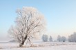 Winter landscape of frosted trees against a blue sky at dawn
