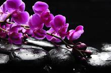 Zen stone et rose orchidée avec reflet