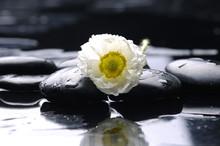 Spa encore la vie avec des fleurs blanches sur les gouttes d'eau