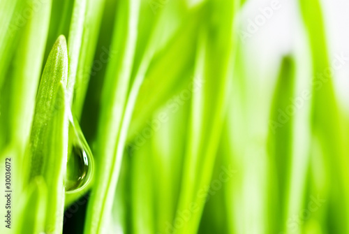 Green grass on white background