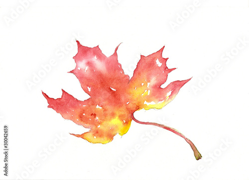 Watercolor of a maple leaf