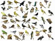Set of 54 different photographs of birds isolated