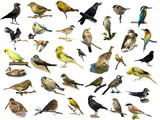 Set of 35 (different) photographs of birds isolated