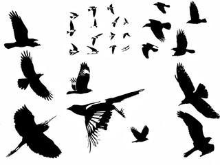 B&W silhouette birds in flight