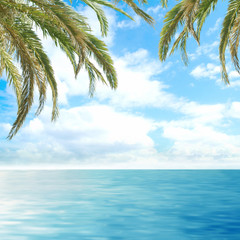 A beautiful resort background with sea, sky and green palms