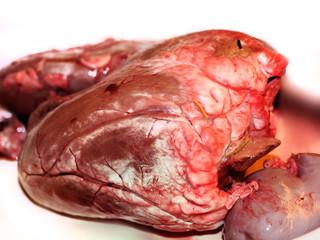 Herz und Niere