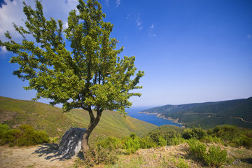 Tree at mediterranean coast