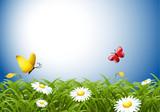 butterfly spring meadow