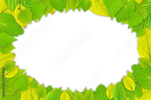 园植物学清洁的墙特写环境生态学白色秋天秋季空间