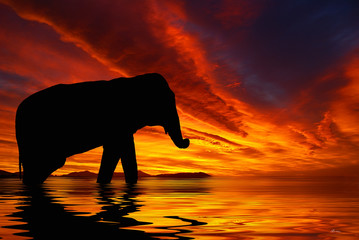 Silhouette of elephant against a red sky during sunset..