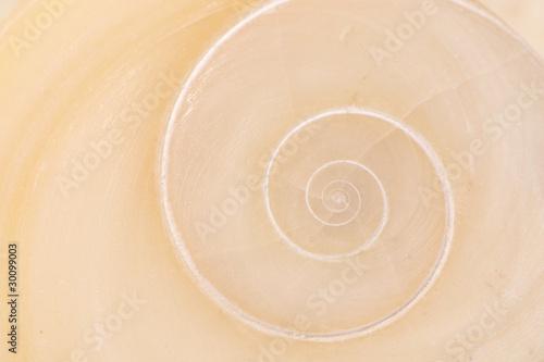 Leinwandbild Motiv Operculum mit spiralförmigem Muster von Muschel am Strand