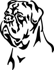 Dogue de Bordeaux / Bordeaux-Dogge