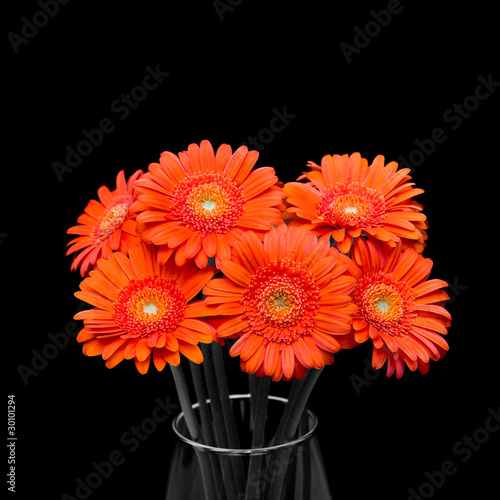 Orange gerbera flower in vase on black background