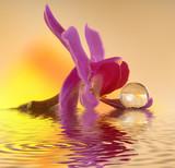 Orchidee auf Stein mit Wassertropfen - 30102808