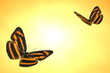 Tiger butterflies Render