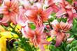Pink lilies bush in garden