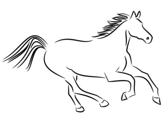 Illustration of a wild horse