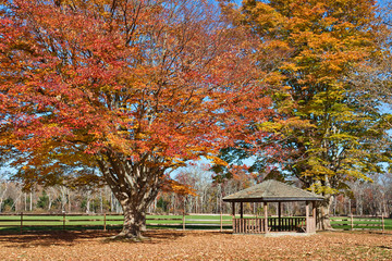 Gazebo in Autumn