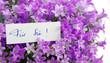 Für Sie! mit Glockenblumen