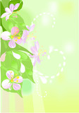 Spring background with blooming flowers poster