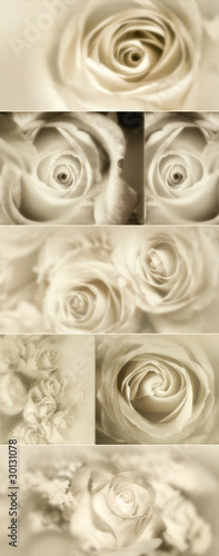 Roses Collage from photos in sepia