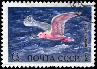 USSR - CIRCA 1972 Pink Gull