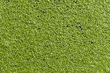 algae poster