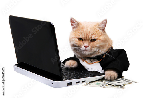 Red cat sitting on the laptop, dollar