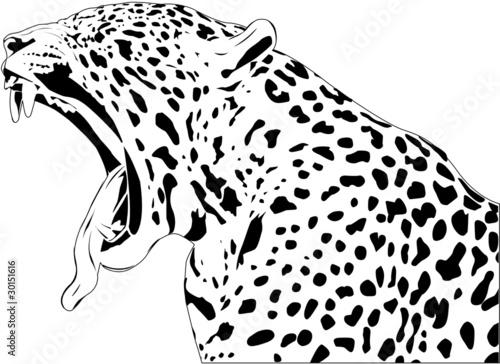Jaguar on Jaguar Yawn De Jamielamb  Vector Libre De Derechos  30151616 En