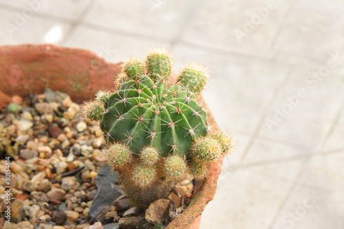 Pincushion Cactus at shallow depth